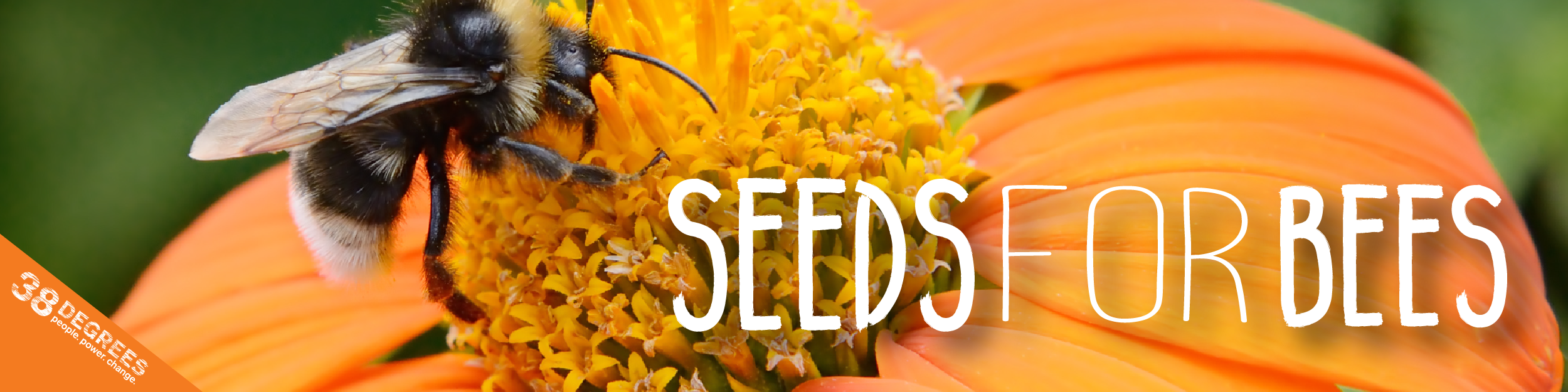 Bee Seeds Order Page Please Complete All Fields Ma